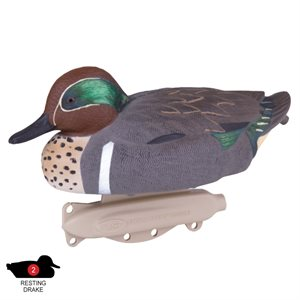 Storm Front Green Wing Teal