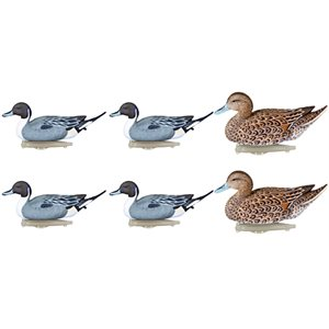 Storm Front Pintail